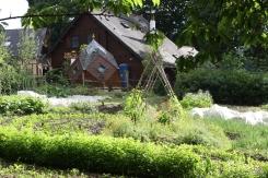 Le jardin-potager avec, en arrière plan, le lieu des consultations d'astrologie