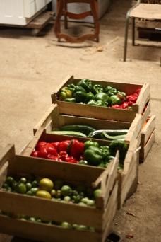 Légumes fraîchement récoltés.