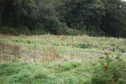 Un des terrains maraîchers.