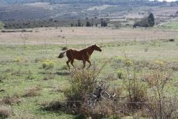 Balade à cheval à l'entrée des montagnes noires.