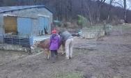 Pilou et Sophie auscultent Fanfan