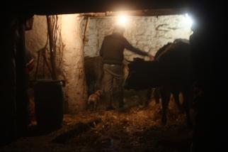 Pilou s'occupe des bêtes