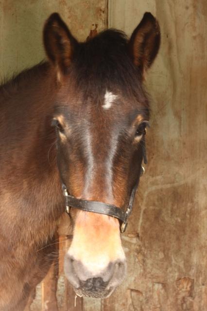 Un des chevaux