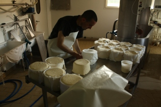 Fromage en fabrication